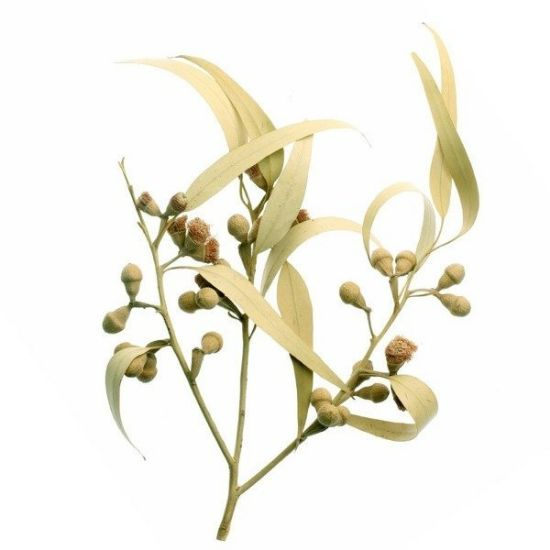 Obrazek Apothecary Aroma Spray EUKALIPTUS 30 ml