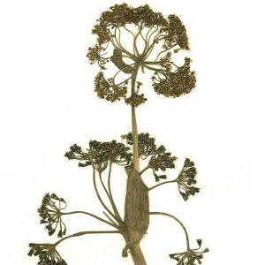 Obrazek Florascent olejki eteryczne w sprayu  15 ml